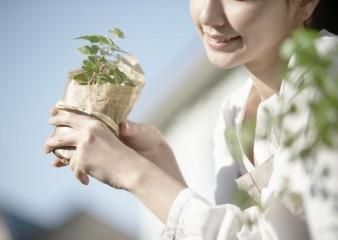 お勧め・観葉植物の選び方